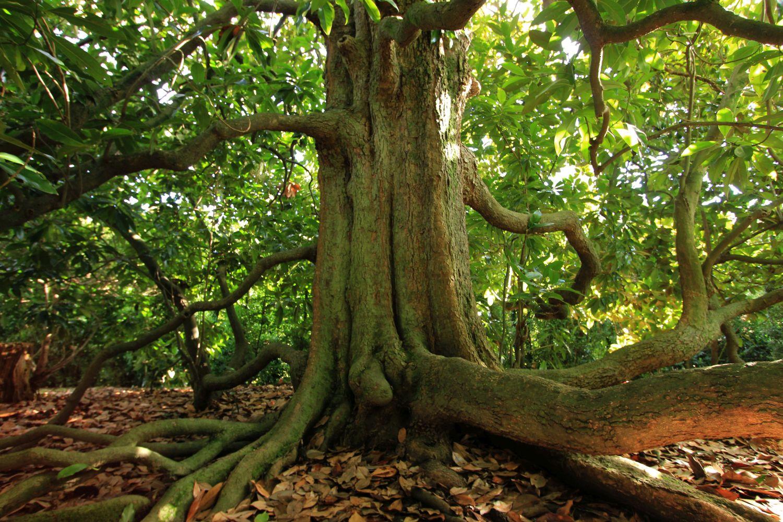 Valsanzi Garden Magnolia